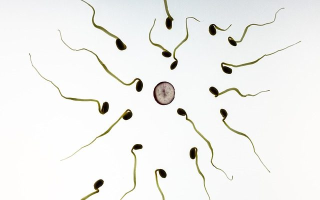 Le sélénium : son rôle potentiel dans l'infertilité masculine